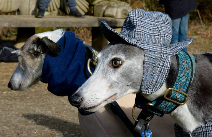 A dog wearing a tweed hat...yes, really!