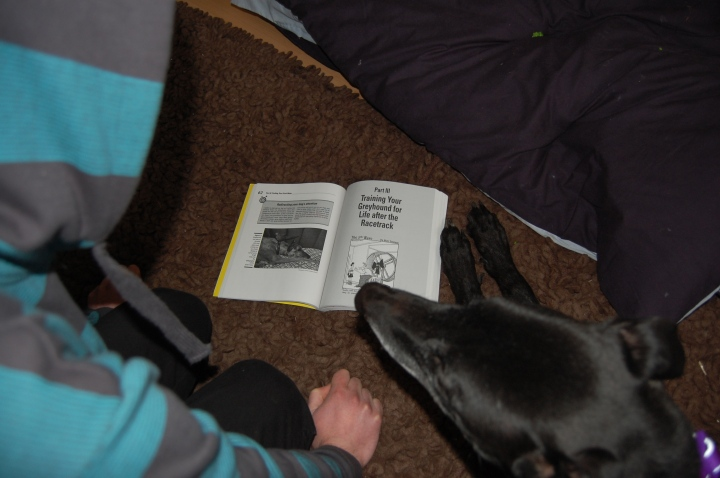 Perusing the Dummies Guide to Retired Racing Greyhounds together.
