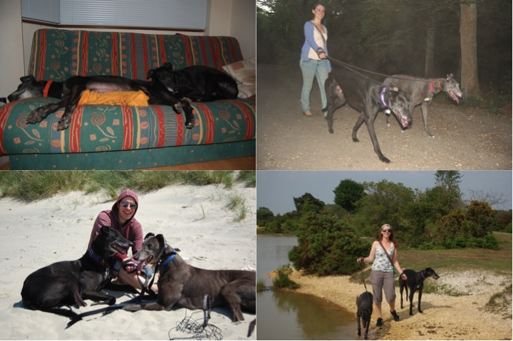 Tigs Rocket's harem. Clockwise from top left: Chilling out with Flo, exploring Wimbledon Common with Lila, visiting the New Forest with Marge and Reaching the Beach at West Wittering with Pearl.