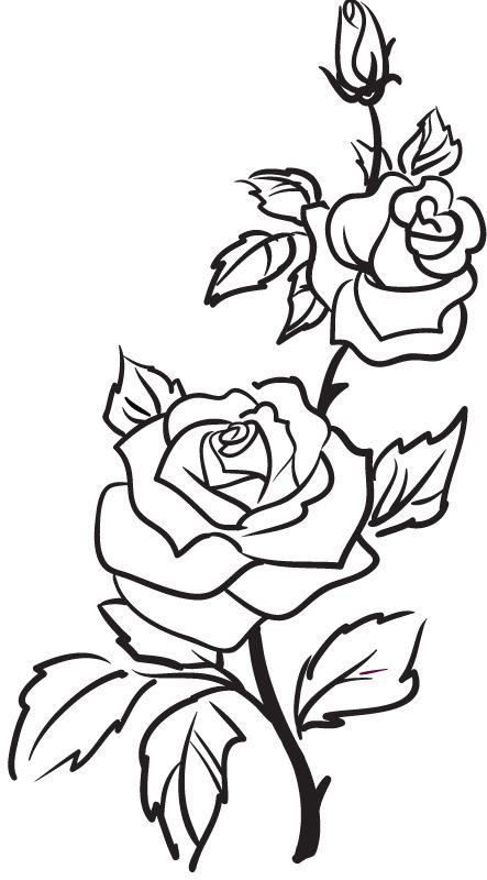 The template I used to transfer the rose design to the cake